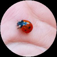 ladybug-circle